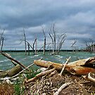 Driftwood Shores by Greg Belfrage