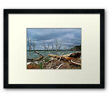 Driftwood Shores Framed Print