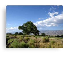 Bishop Landscape Canvas Print