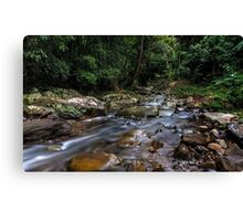 Creek in the Wilderness Canvas Print