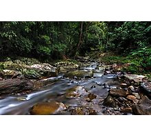 Creek in the Wilderness Photographic Print
