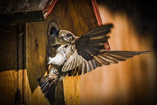 FEEDING TIME by Sandy Stewart