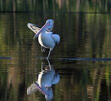 Pelican Yoga by byronbackyard