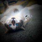 Catnip by redhairedgirl