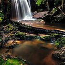 Untidy Forest by Mark  Lucey