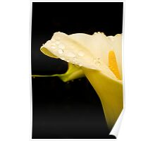 A lily with water droplets in portrait Poster