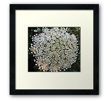 Wildfower Macro series: Queen Anne's Lace , Part One  Framed Print