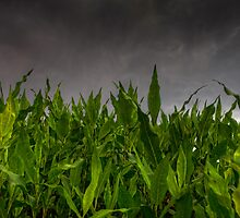 Foliage vs Clouds by Bob Larson