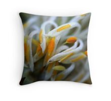 Petrophile canescens Throw Pillow