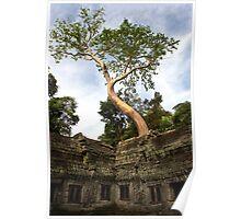 Ta Prohm Temple - Angkor - Cambodia  Poster