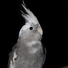 Bird  by Jodie Bennett
