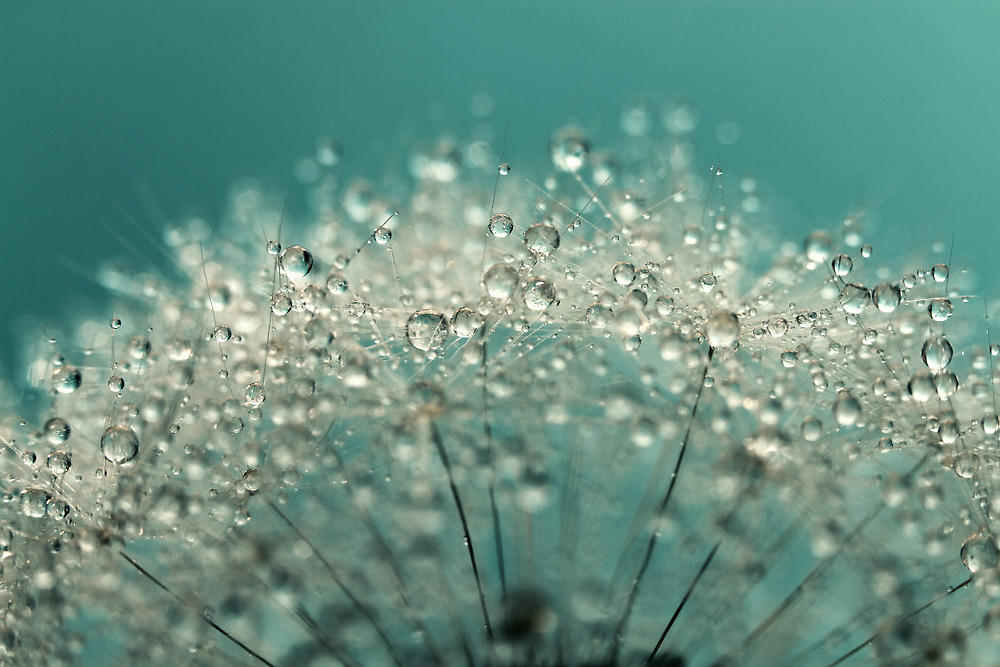 Cyan Sparkles by Sharon Johnstone