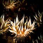 White Striped Anemone (Anthothoe Albocincta)  by Kerrod Sulter