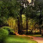 Magical Forest  by Johanna26