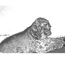 coco 2 Photographic Print