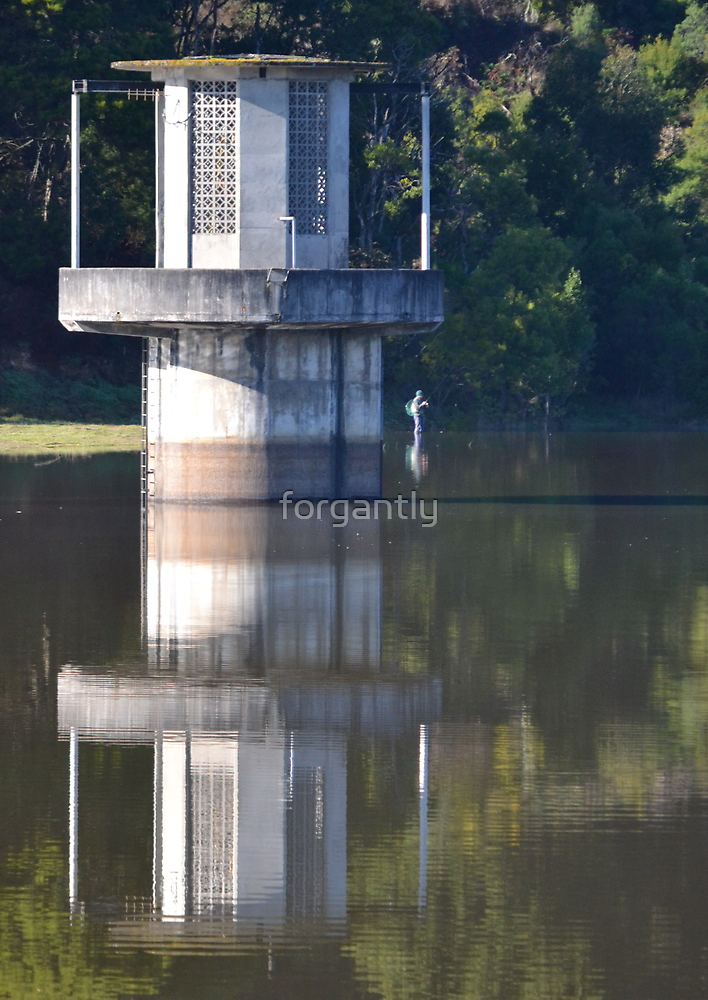 Fishing for Reflections by forgantly