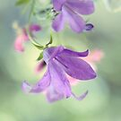 Pastel Softness by Donna-R