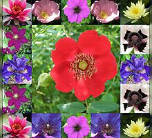 Essex Flowers Collage featuring Dreamy Wild Roses by Kathryn Jones