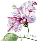 Single Pink Hibiscus Flower by Esmee van Breugel