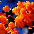 Berberis Against Blue Sky by shadedfaces