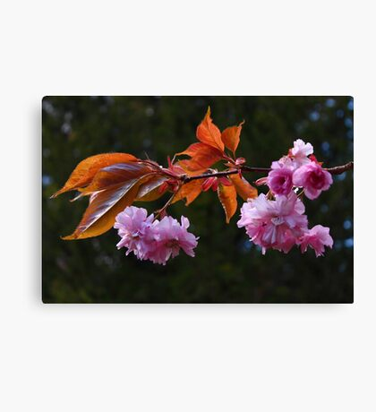 Ornamental Fruit Tree Blossom Canvas Print