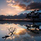 Sunrise Tree by Ian  Clark