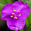 Purple Flower by Moonlake