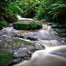Leura Creek Allure by Peter Hill
