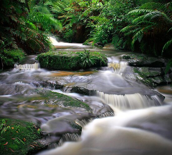 Leura Creek Allure by Peter Hill