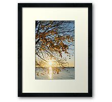 Brilliant Yellows and Blues - the Golden Maple on the Lake Shore Framed Print