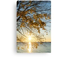 Brilliant Yellows and Blues - the Golden Maple on the Lake Shore Canvas Print
