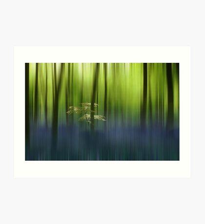Autumn Forest Colours Art Print