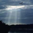 Every Cloud Has A Silver Lining. by Kathy Baccari