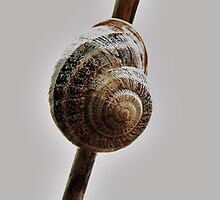 Snail on a Steeeek by Ron Russell
