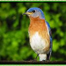 Eastern Bluebird by David Dehner