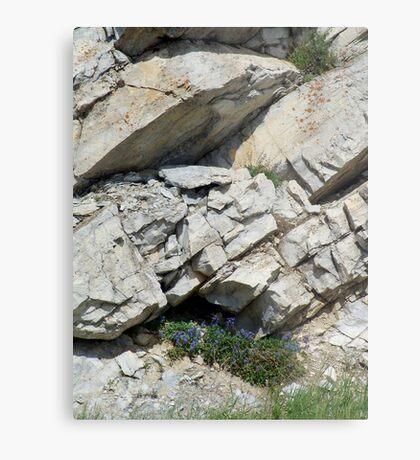 BLUE BOUQUET ON THE ROCKS - ROADSIDE GLACIER NATIONAL PARK Metal Print