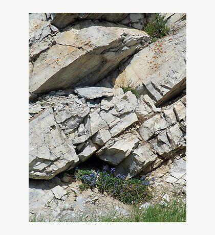 BLUE BOUQUET ON THE ROCKS - ROADSIDE GLACIER NATIONAL PARK Photographic Print