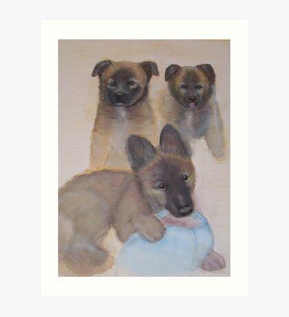 Belgian Shepherd, called Tervueren Art Print