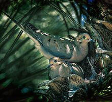 Love a Dove Dove by Chris Lord
