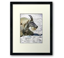 King of the Mountain Framed Print