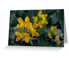 Wild Flower Series:  Birdsfoot Trefoil  No. 2 Greeting Card