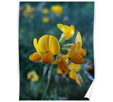 Wildflower series: Birdsfoot Trefoil, No. 1 Poster