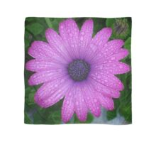 Purple African Daisy with Raindrops Scarf