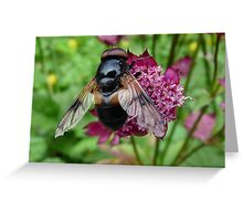 Fly Me a Flower Greeting Card