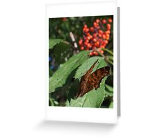 Butterfly Macros: Painted Lady Greeting Card