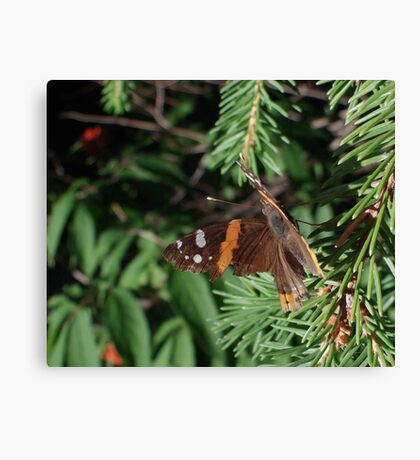 Butterfly Macros: Red Admiral Canvas Print