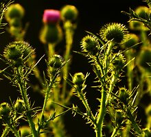Prickly by Robin Simmons