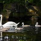 Swan family by Esther  Moliné