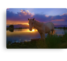 Evening Skies Benediction~ Little Chief White Cloud my adopted wild horse enjoying his favorite place down at pond, White Pine County, Nevada. Canvas Print