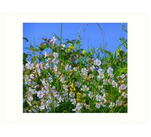 Summer Hedgerows Art Print